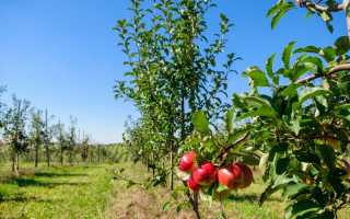 Как сформировать крону яблони: для чего нужно, сроки, схемы обрезания