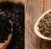 Чем полезен чёрный тмин для женщин: как принимать, как выбирать и готовить, противопоказания