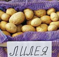Картофель Лилея: описание, характеристика и выращивание сорта, урожайность и вкусовые качества, особенности посадки и ухода, фото