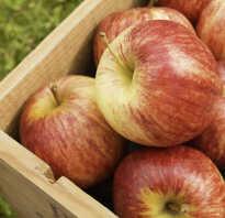 Яблоки Гала: описание и характеристика, плюсы и минусы, посадка и уход, фото