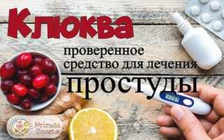 Использование клюквы при простуде и ОРВИ: приготовление, лучшие рецепты и способы применения