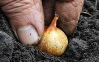На какую глубину сажать лук на зиму: особенности и правила посадки лука, оптимальное время