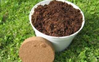 Как посадить фикус в домашних условиях: в какой горшок и в какую землю, пошаговая инструкция, уход после посадки, фото, видео