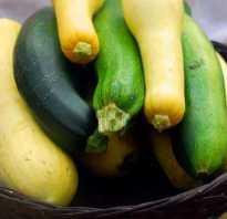 Чем отличаются цукини и кабачки: по составу, по вкусу, по внешнему виду, основные отличия, фото