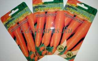 Морковь сорта Осенний король: основные характеристики сорта, плюсовые качества, выращивание и уход, фото