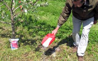 Подкормка черешни осенью, весной и летом: чем можно удобрять, особенности ухода