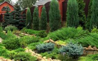 Виды сосен: фото с описанием и названием, в ландшафтном дизайне, декоративные для сада