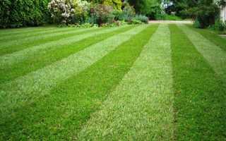 Как сеять газонную траву: практичные советы от экспертов