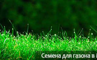 Как долго живёт рулонный газон: какой срок жизни и службы газонной травы