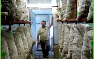 Выращивание вешенки в теплице: можно ли вырастить своими руками в домашних условиях