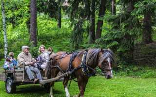 Телега для лошади: как сделать своими руками, чертёж с размерами, как правильно запрячь лошадь