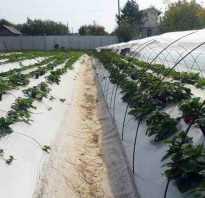 Выращивание и уход за клубникой в открытом грунте: методы выращивания, сроки созревания