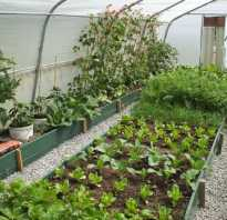 Что можно выращивать в одной теплице одновременно: растения-компаньоны, длительное плодоношение