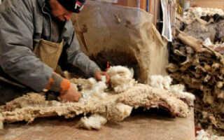 Изделия из натуральной овечьей шерсти: характерные особенности переработки и производства