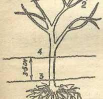 Период вегетации у крыжовника: когда начинает цвести крыжовник, сроки цветения, от чего зависит