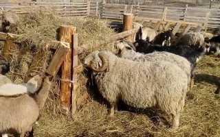 Как сделать кормушки, ясли, поилки для овец своими руками: под зерно, сено, рулоны сена, схемы, чертежи