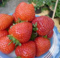 Клубника Спаржи: ботаническое описание и характеристика, агротехника выращивания и ухода, фото
