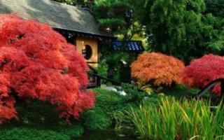 Красный клён: фото, использование в ландшафтном дизайне, декоративный и карликовый, виды и их названия, посадка и уход, как размножается, болезни