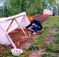 Как сделать парник для рассады в домашних условиях своими руками: материалы для изготовления, особенности высадки и выращивания рассады, фото