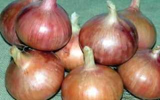 Лук Росанна: описание и характеристика сорта, посадка, выращивание и уход, фото