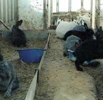 Кролики в теплице зимой: особенности содержания, обустройство теплицы, содержания с другими животными, условия для разведения