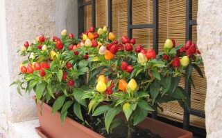 Выращивание перца на балконе — как вырастить, лучшие сорта, фото