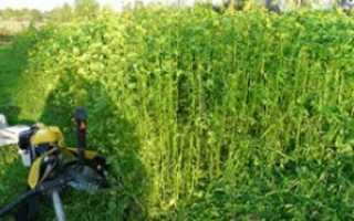 Что можно посадить после малины в огороде на следующий год, сидераты для восстановления почвы