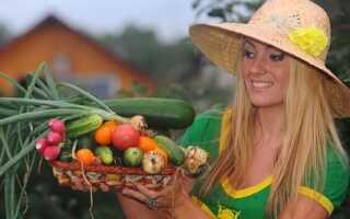 Сорт традиционной сибирской малины Зоренька Алтая: особенности выращивания, описание сорта, фото